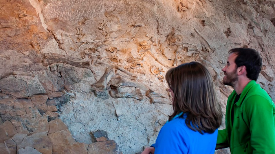 visitors looking a cliff face covered with dinosaur fossils