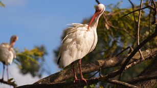 Return of Wading Bird Supercolonies!