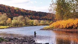 Visitor fly fishing in a river lined with fall foliage
