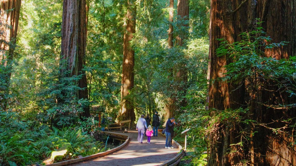 People on a boardwalk next to redwoods