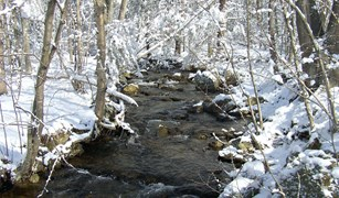 Snow covered creek in the woods