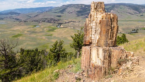 a fossilized stump of wood on the edge of a cliff that looks out on a green valley.