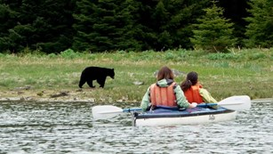 two people in a kayak with black bear on beach
