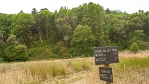 Grassy valley with trees on hill behind and Olema Trail sign in foreground