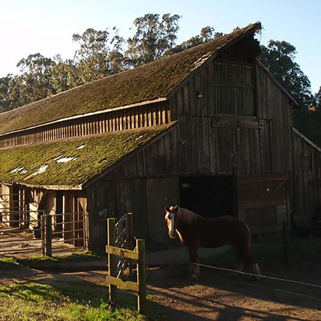 wood barn with horse in front
