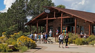 Front entrance to Bright Angel Lodge. Visitors standing in front; shrubbery has yellow fall flowers.