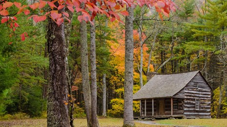 A log cabin in a clearing in the forest, surrounded by fall colors.