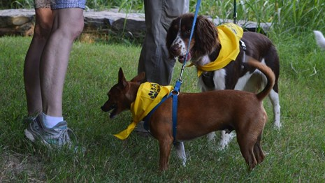 Two dogs wearing yellow bandannas