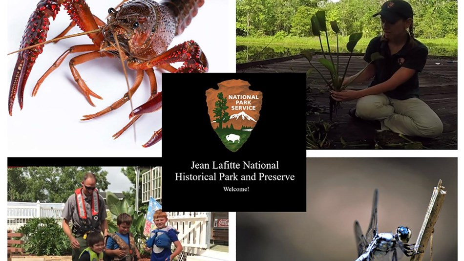 a crawfish, an adult with kids in life jackets, a dragon fly, a scientist holding an aquatic plant