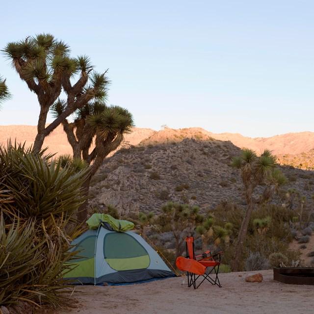 Joshua Tree National Park - 5043 Photos & 838 Reviews ...
