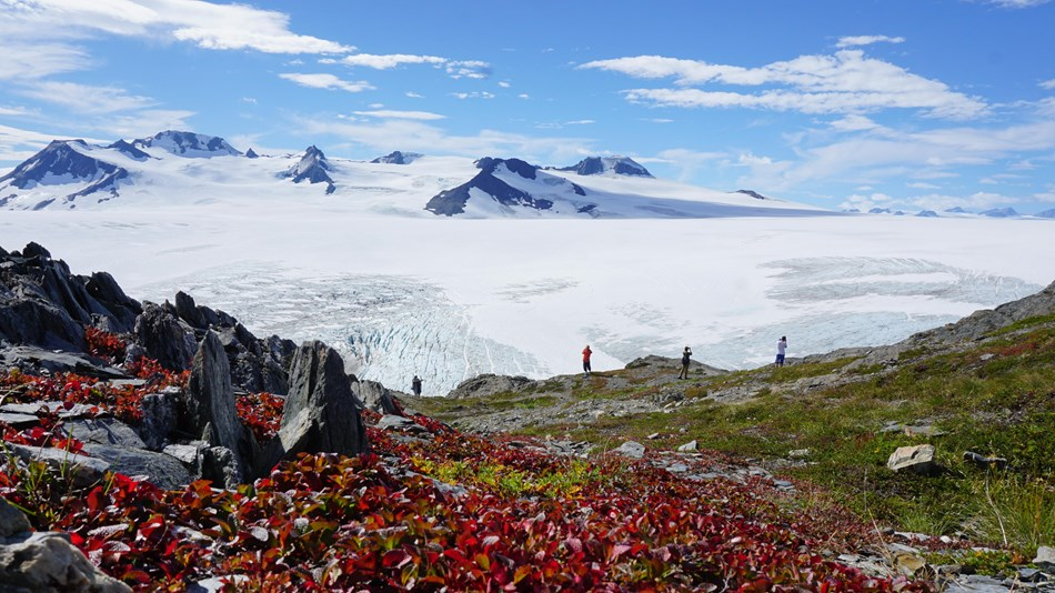 Hikers take in the view of the Harding Icefield. In the foreground, bearberry turns a brilliant red