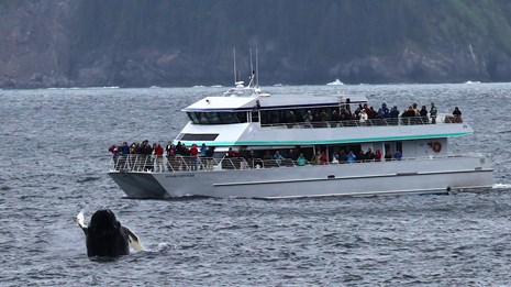 Tour boat with humpback whale breaching
