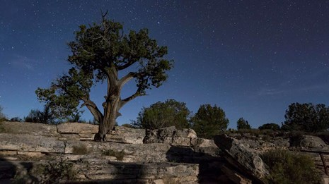 Juniper tree on a cliff under a starry sky