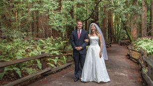 A  bride and groom among the redwoods