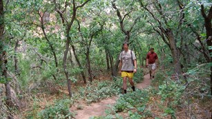 two men walking on a forested trail