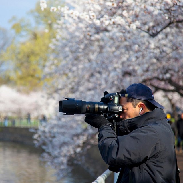 Photographer with a large lens near cherry blossom trees and water