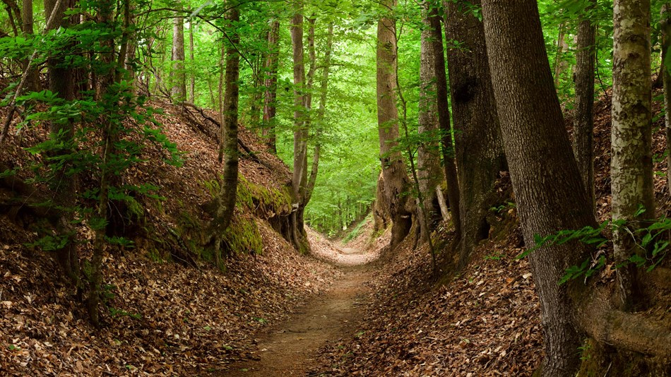 a section of the Old Natchez Trace known as sunken trail due to the erosion along the path.