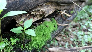 A small plant grows between a crack in a log