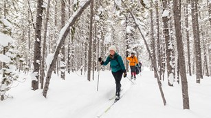 Several cross-country skiers in snow-covered woods