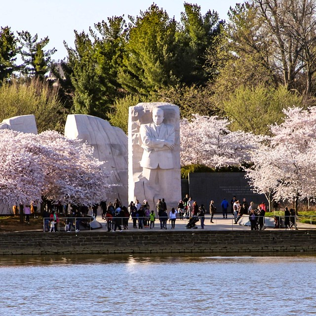 Statue of Martin Luther King Jr. surrounded by visitors and blossomed cherry blossom trees