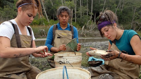 Students get their hands dirty during a wetland field study