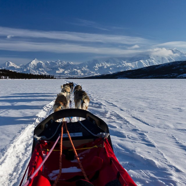 Front of dog-mushing sled with snowy mountain in background