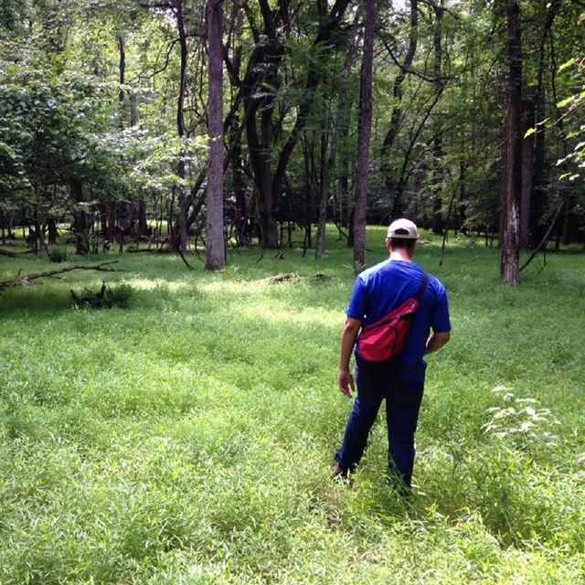 Hiker in the forest with a red backpack