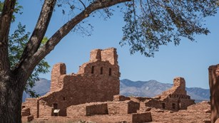 A leafy Siberian elm frames the ruins of a red sandstone church at Abó.