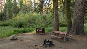 A picnic table, fire ring, and metal food-storage box in a forest