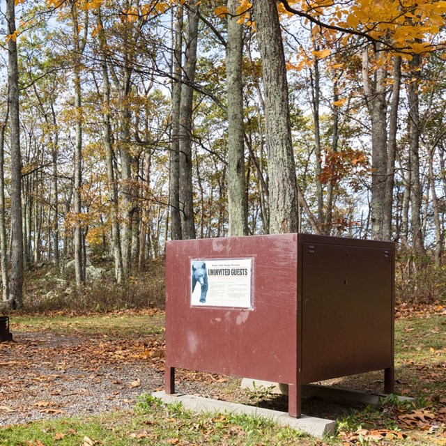 A brown metal box sits in front of a row of picnic tables in the woods.
