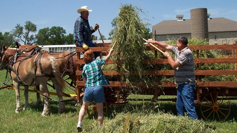 visitors having fun pitching hay into the hay wagon using pitchforks