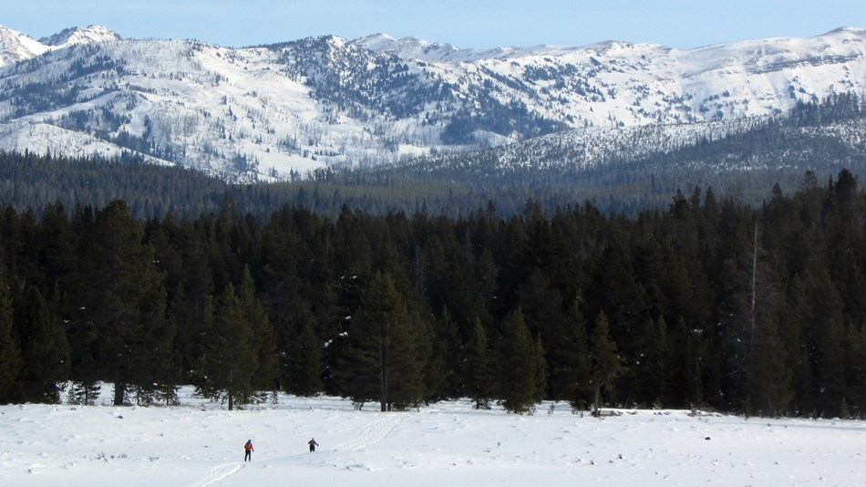 Skiers make their way toward a forested section of the Fawn Pass Ski Trail.
