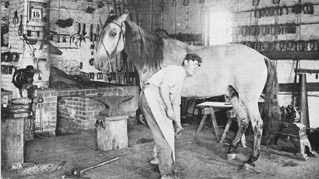 blacksmith working with a horse