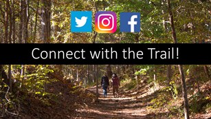 People walk down a tree tunnel path with social media icons placed on the image.