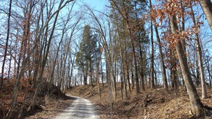 A dirt road leads through a deciduous forest with leafless trees.