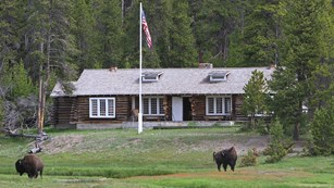 A one-story log cabin across a meadow with bison in it