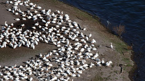 A large flock of white birds on the shore of an island.