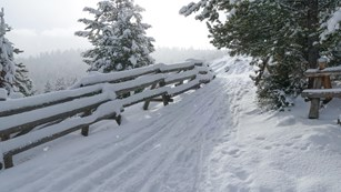 Ski trail running parallel to a wooden fence through a snowy forest scene.