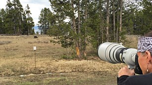 A person looks through a camera with a large zoom lens at a bear in the distance