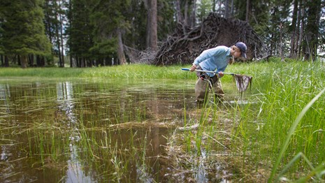 Researcher examines a net in a bog.