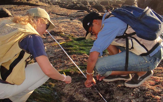 Volunteers Elise Watson and Mario Diaz measure algal turf along a line transect at Cabrillo NM