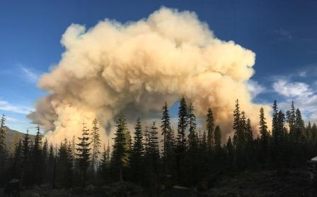 plume of smoke rises above forest