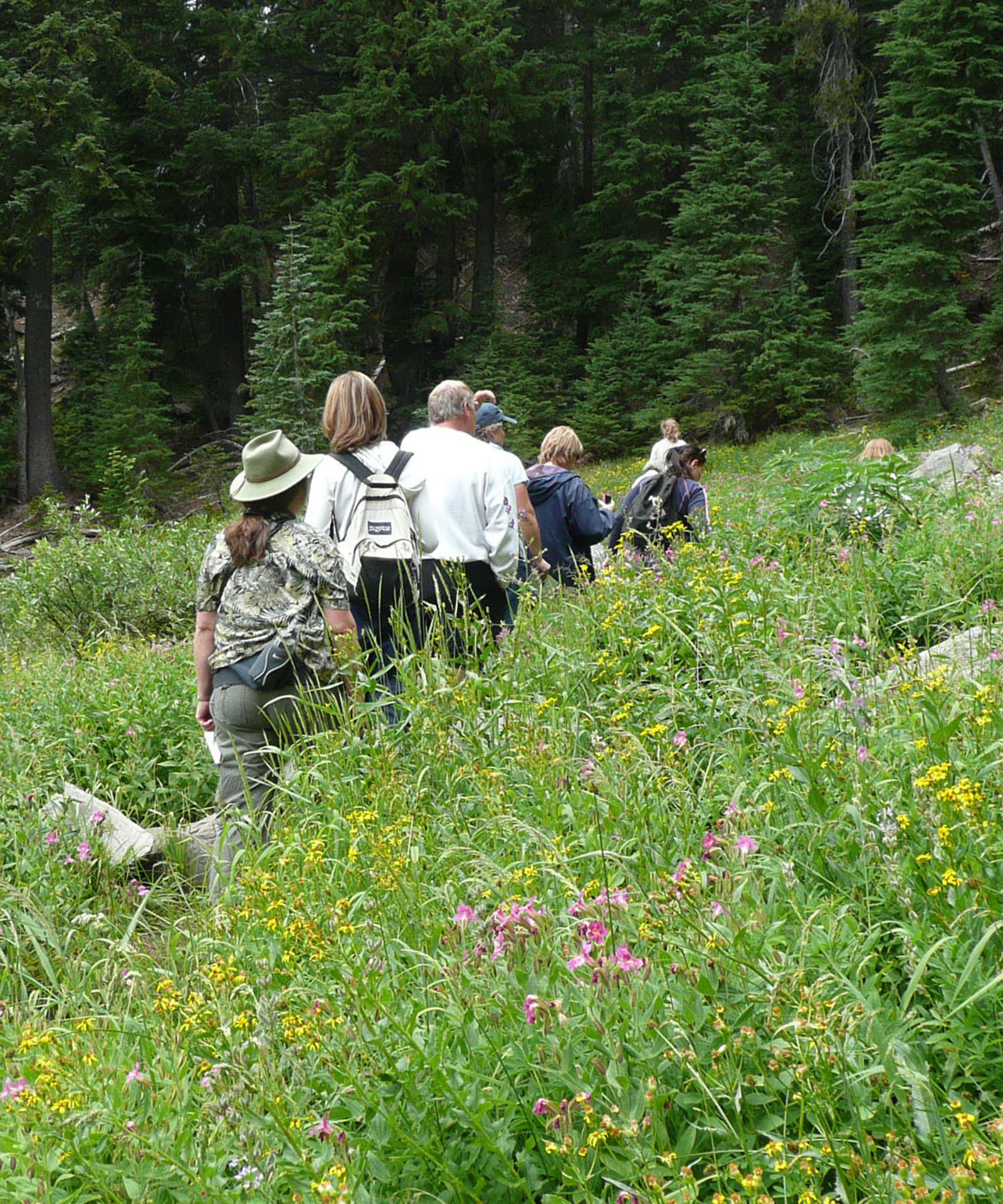A line of hikers walk along a trail through waist-deep green grasses and yellow and pink flowers.