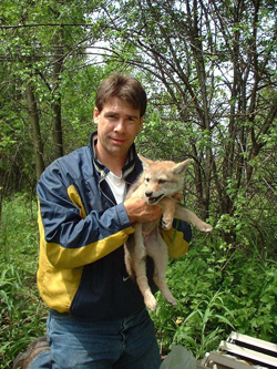 Dr. Stanley Gehrt with coyote pup