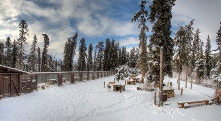 Denali dogyard in winter