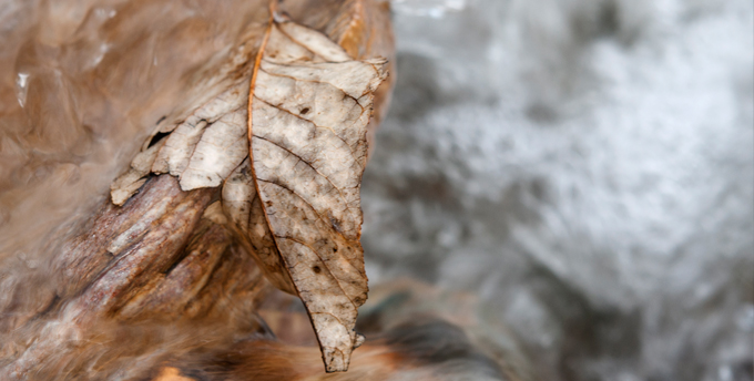 closeup of a dead, brown leaf on a rock in a swiftly-moving creek