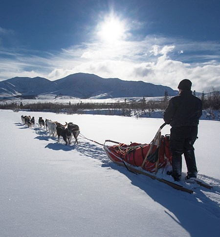 a dog team pulls a sled and musher on a sunny day