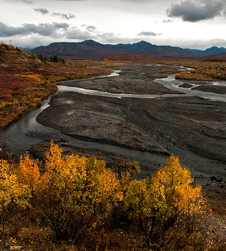 Fall leaves overlook a braided river channel with mountains in the background