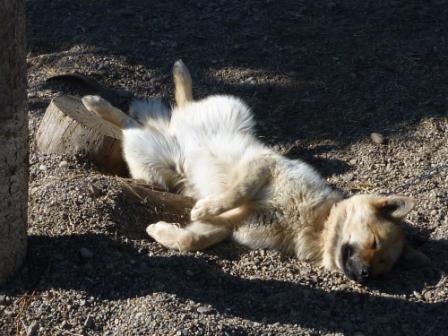 nuna enjoys the sun in summer