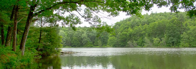a pond with trees overhanging the edges